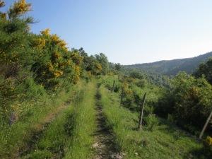El camí enfila llavors molt clarament cap a Coll Pregon. Gaudiu del paisatge d'estiu!