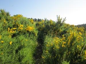 Tot i que el camí és molt marcat, a l'estiu queda una mica amagat per l'herba!!
