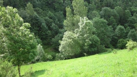 Tot baixant, gaudiu del tendre paisatge d'estiu. Llum i vent fent meravelles!