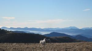 Tot passejant per la carena recollim infinites imatges de somni. Les eugues pasturen a muntanya fins que arriba el rigor de l'hivern.