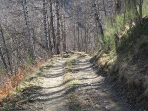 Els matins d'hivern, la llum és dolça i màgica dins el bosc tot baixant cap a Fabert