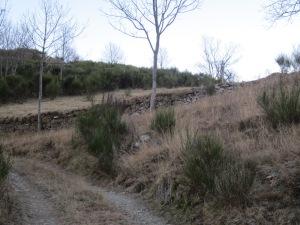Pugem per una ampla pista fins que arribem a aquest punt. Un mur de pedsra seca ens indica el trencant que hem de prendre.