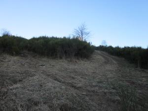 Tot seguint el camí, pareu atenció en aquest punt. La pista que s'obre a mà dreta és nova, probablement per a l'ús dels ramaders, però sol desaparèixer amb la vegetació de primavera i estiu. Seguiu la de l'esquerra, estreta i frondosa però permanent!