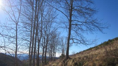 El camí de tornada a Espinavell és magnífic. De primer planeja, després puja fins al Serrat de la Perdiu i, finalment, baixa de dret cap a casa.
