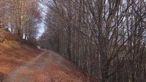 Travessant el bosc