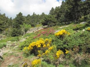 Floració a la Coma de l'Orri
