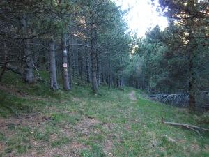 De seguida trobem un senyal que ens indica que el camí no segueix recte. NO EN FEU CAS, el nostre camí segueix endavant, dret.