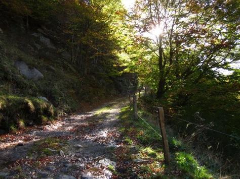 El camí, que puja suaument, és deliciós. Llums brillants, fulles de mil colors i la frescor dels torrents que baixen de la muntanya.