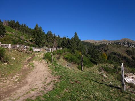 El bosc acaba i s'obre el paisatge. Arribem a un tancat per a bestiar. No heu de resseguir-lo per la dreta, l'heu de travessar!!! Seguiu el camí.