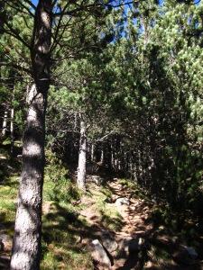 A estones som ben tancats dins el bosc...