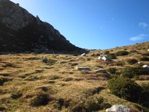 Busqueu un lloc arrecerat del vent i espieu el gran Bac de Costabona. La vida s'hi amaga!!!