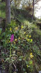 Les primeres orquídies