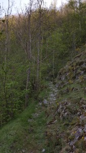 Camí de Siern
