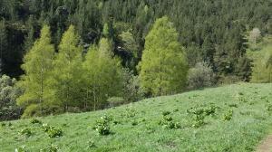 Pastures i bosc de ribera
